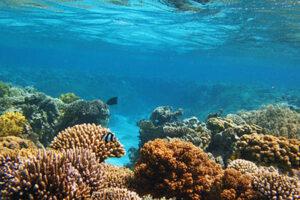 Aqaba Tourism